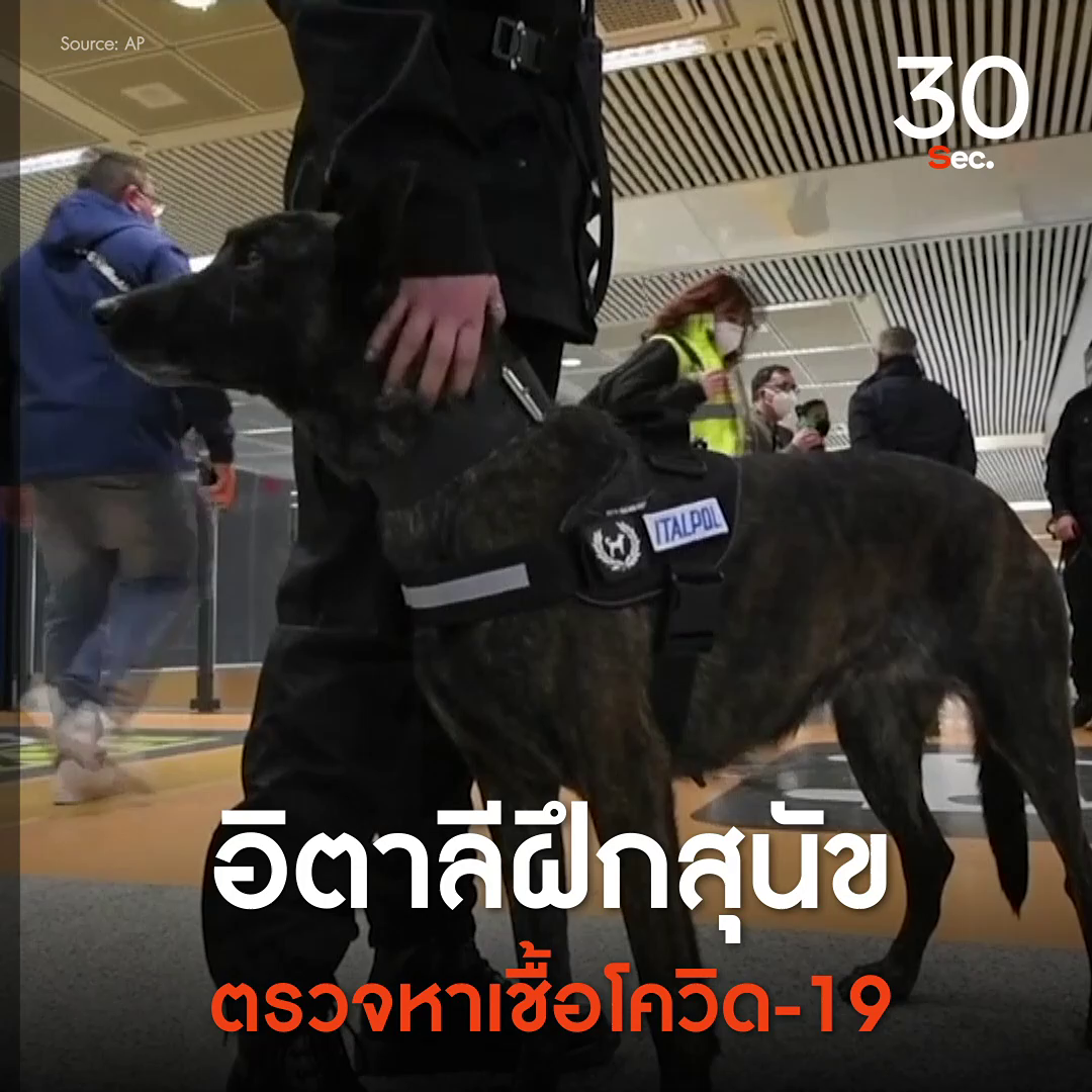 อิตาลีฝึกสุนัขตรวจหาเชื้อโควิด-19