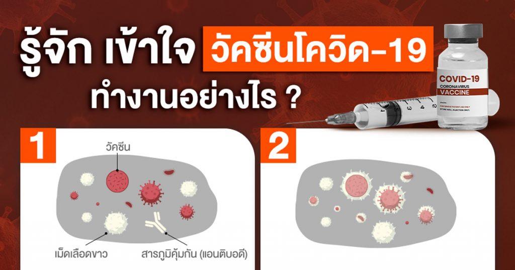 รู้จัก เข้าใจวัคซีนโควิด-19 ทำงานอย่างไร